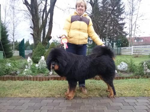Narva Rahvuslik koertenäitus 26.11.2016 Kohtunik Yulija Pokrovskaja Venemaa, 1 Koht,TP